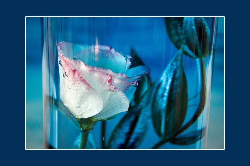 Blau gefärbtes Wasser für die Blumenkompositionen