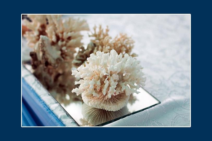 Natürliche Korallen in der Tischdeko